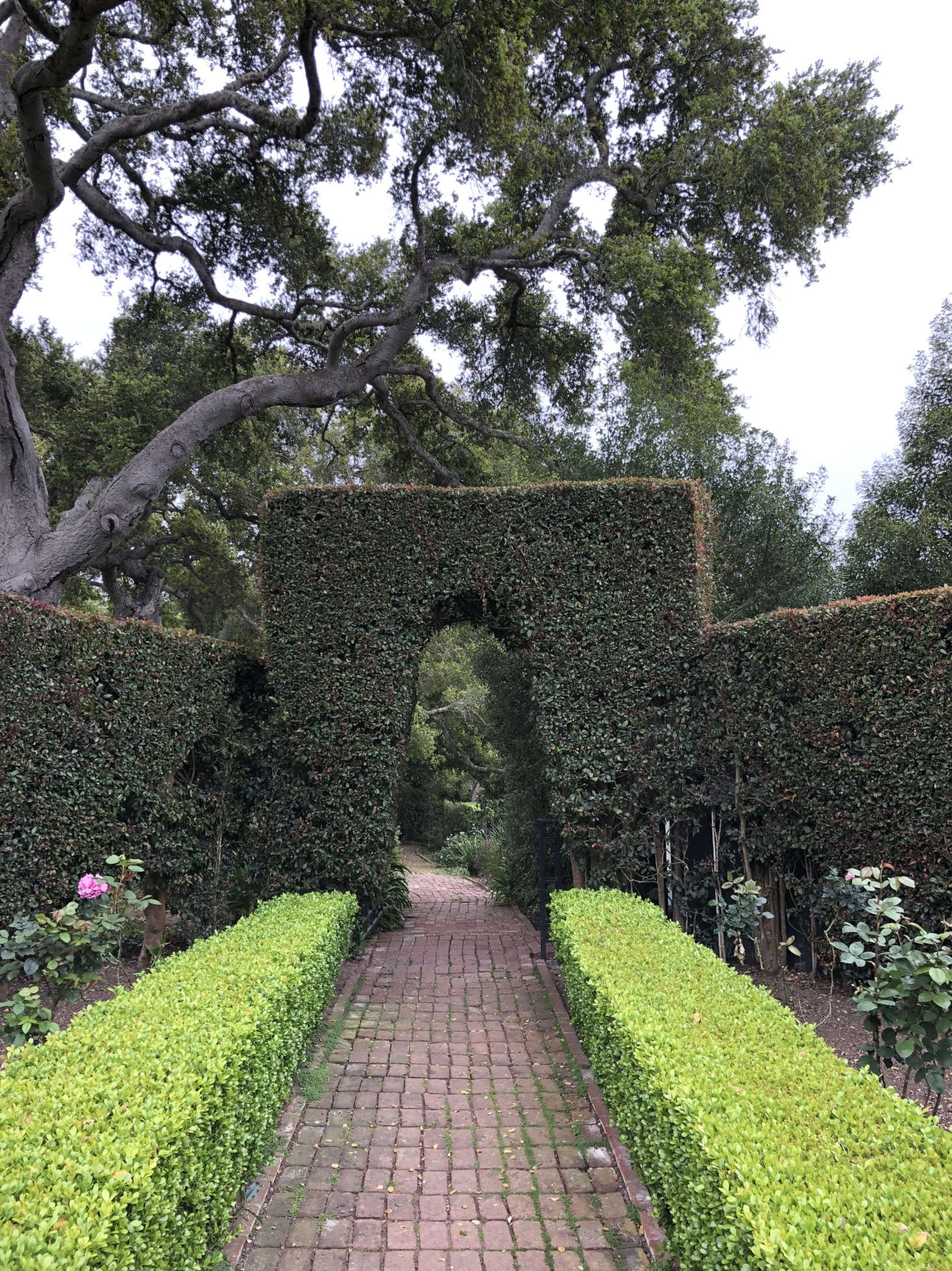 The brick paths are also original; Sosa and team repaired them but opted not to alter their well-worn charm. Here, they wind through the property and through Secret Garden–esque archways in the hedges. Photograph courtesy of Roberto Sosa.