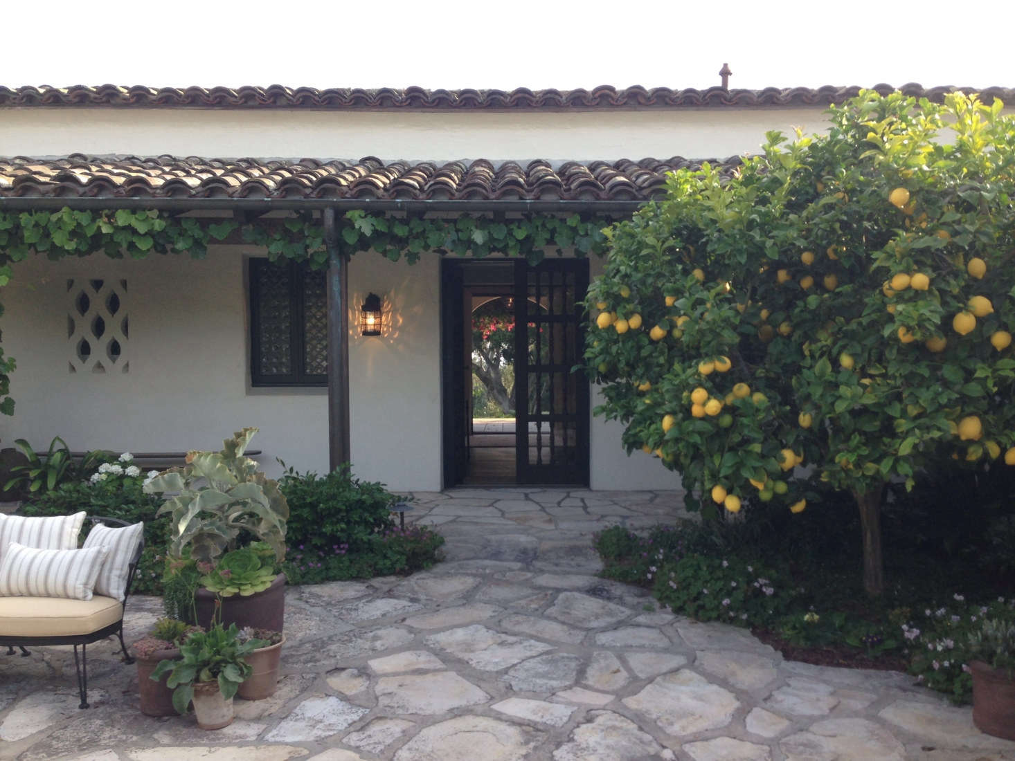 In the interior courtyard, a lemon tree lends a Mediterranean feel—and some respite from the sun. Throughout, Sosa softened the existing hardscaping with informal clusters of potted drought-resistant plants. Photograph courtesy of Roberto Sosa.
