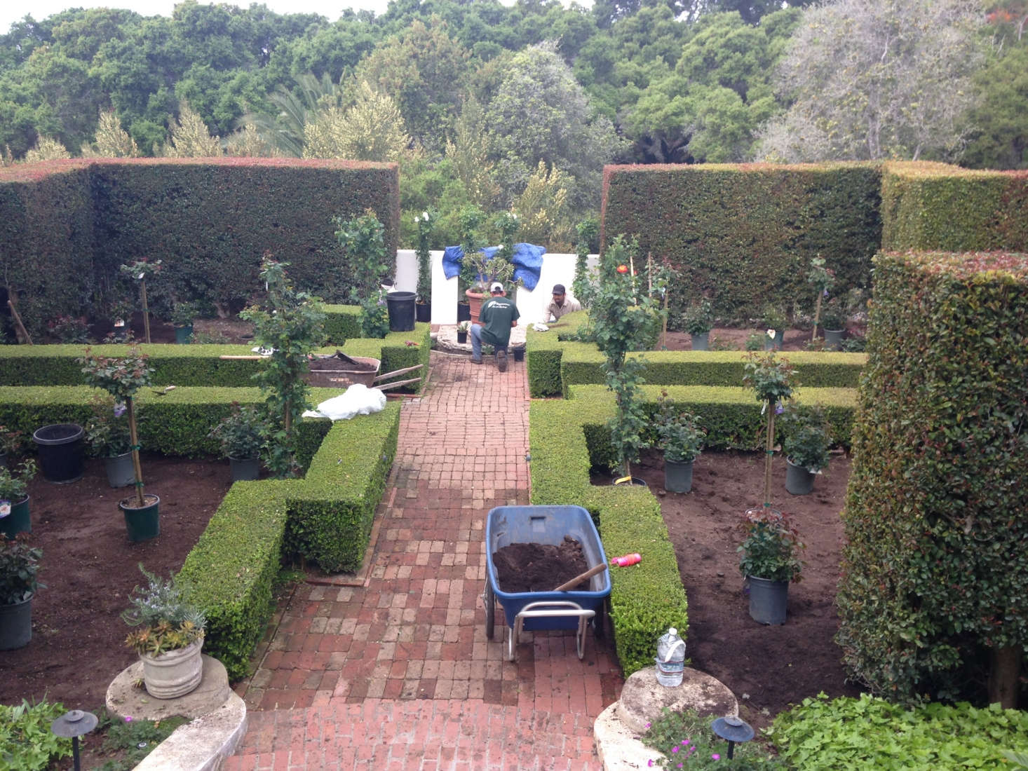 The restoration of the rose garden in progress, with history in mind. Photograph courtesy of Roberto Sosa.