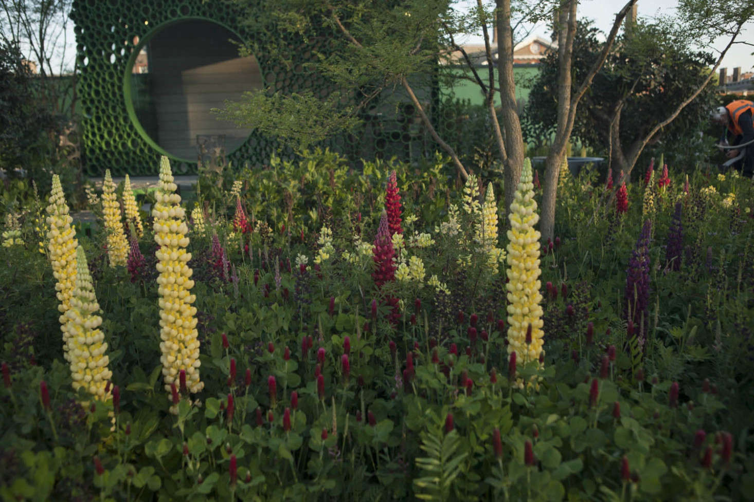 Lupines and trees add height to a meadow of crimson clover and vetch.