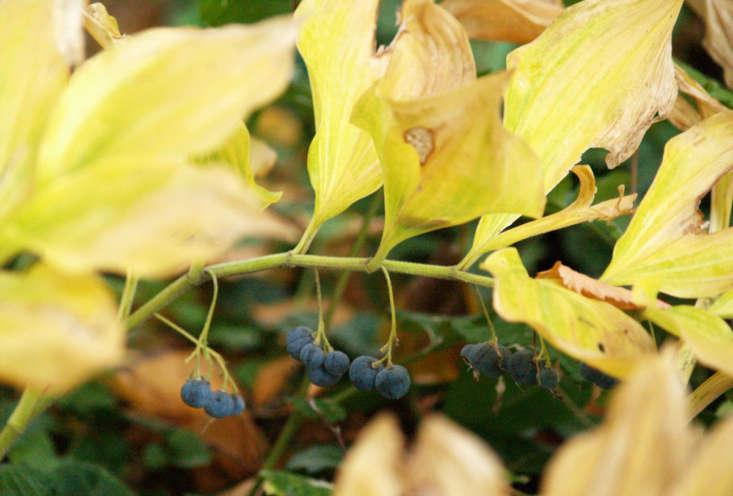 Photograph by Klasse im Garten via Flickr.