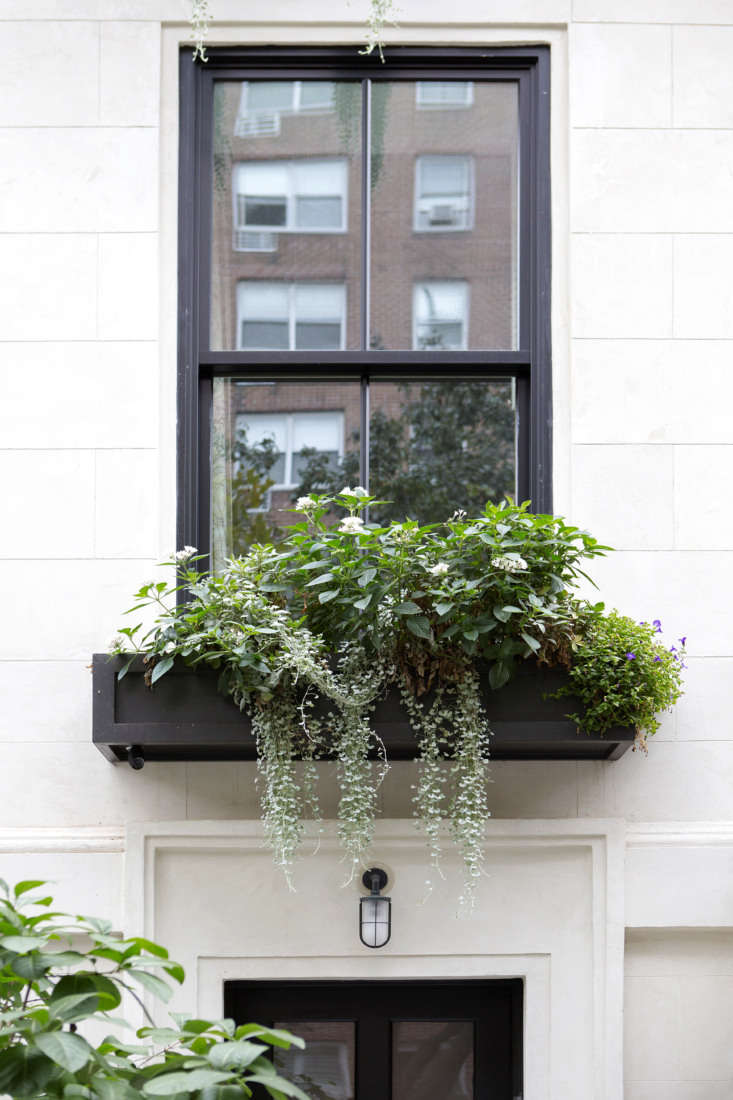 Window boxes planted with Torenia 'Summer Wave' (on either side), Pentas 'Starcluster White' mixed with Dahlia 'Hypnotica Lavender' (middle), and Dechondra 'Silver Falls,' which cascades.