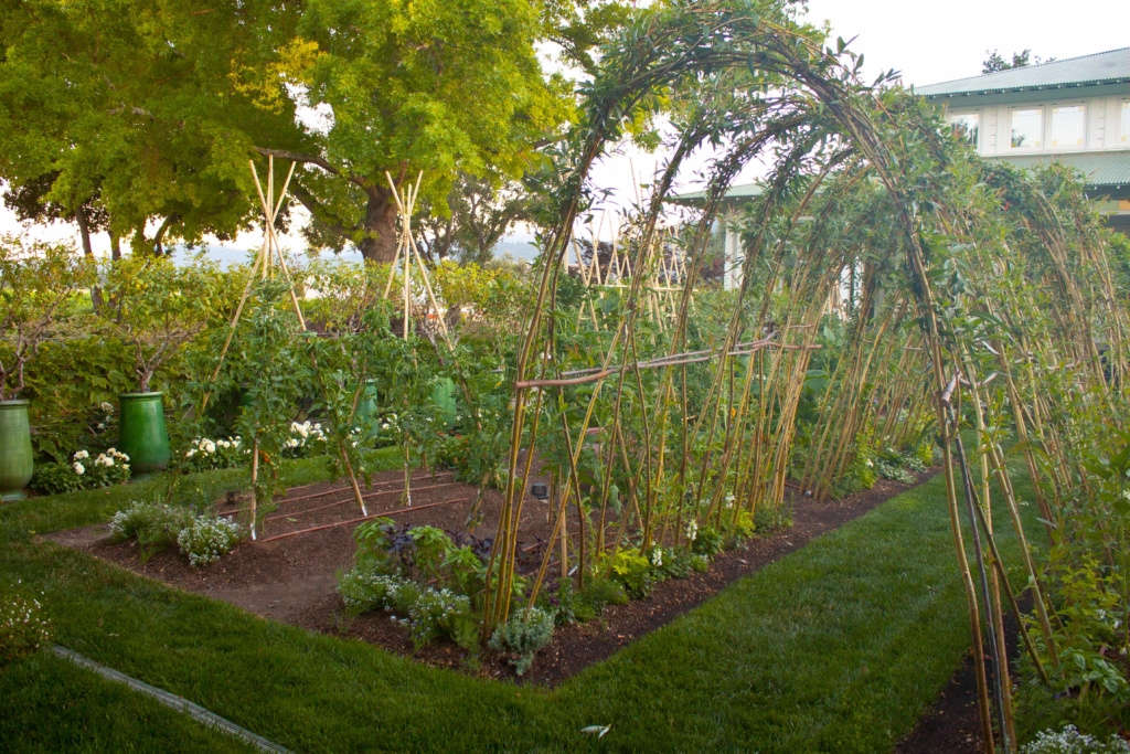Golden Willow Arbor