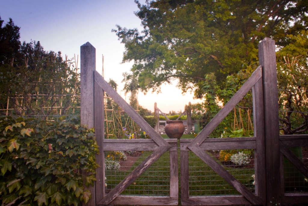 View into the vegetable garden