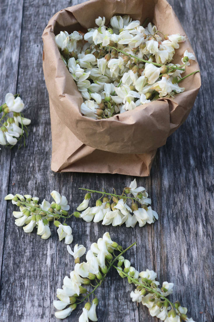 North American native black locust flowers (Robinia pseudoacacia, which are actually white) are called acacia in Europe, and make the famous acacia honey (well, the bees make the honey). The flowers are richly fragrant as well as delicious.