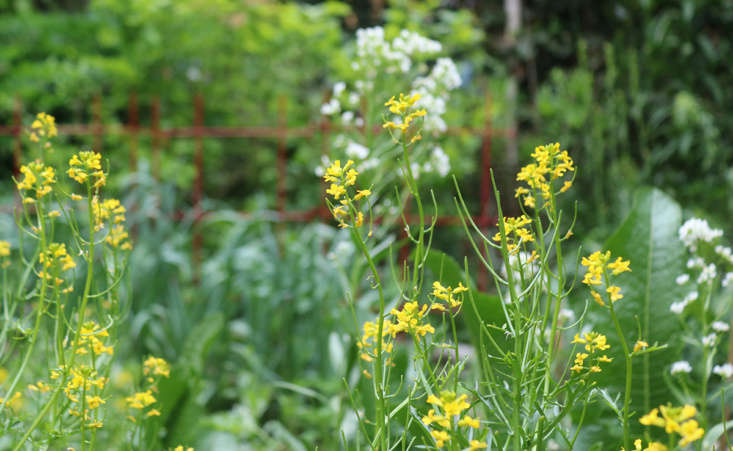 And not just arugula: all brassica flowers are edible. Upland cress flowers are wasabi-hot, and horseradish&#8\2\17;s white blossoms taste like the root in miniature form. Add them to your green gazpacho for a pop of pepper.