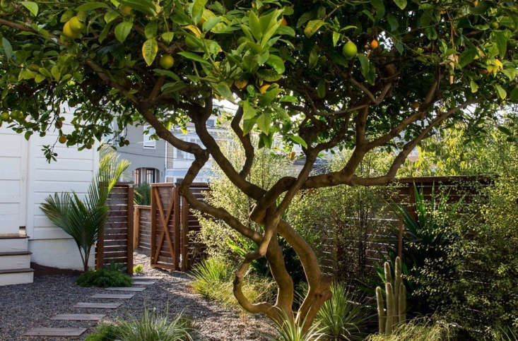 The best time to prune a lemon tree is late winter or early spring. PhotographbyAirykaRockefeller,courtesy of Talc Studio, fromDesigner Visit: A &#8\2\16;Magical Green Pocket Garden&#8\2\17; in San Francisco,