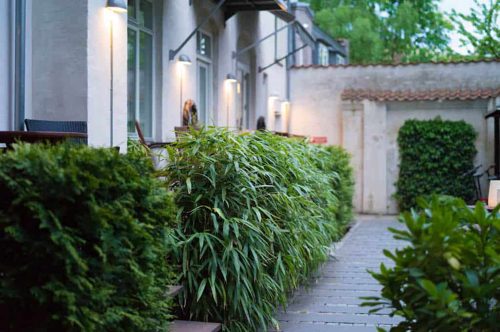 A hedge of Pseudosasa japonica (arrow bamboo) is trimmed precisely (but still manages to have a casual, shaggy air) in the garden at Bertrams Guldsmeden hotel in Copenhagen. See  Garden Ideas to Steal from Denmark.
