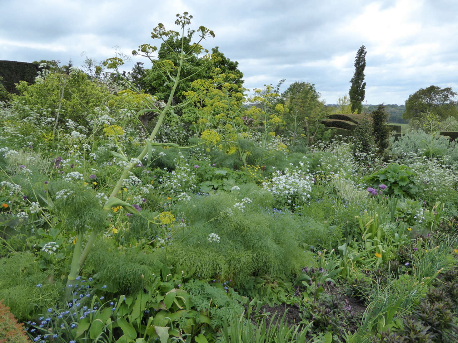 Cow parsley acts as a foil to the zingy lime green of euphorbia and dances around the towering spires of giant fennel.
