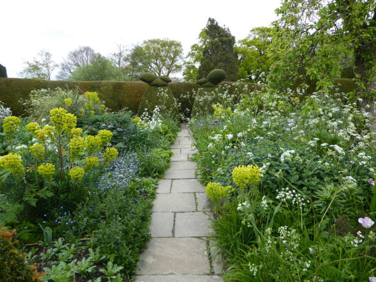 Cow parsley and euphorbia edge a path at Great Dixter, undercutting the formal topiaries standing sentinel.