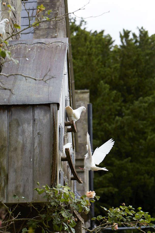 Doves aren&#8