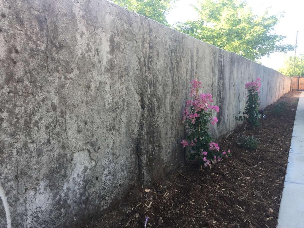 Bogenvilla Wall