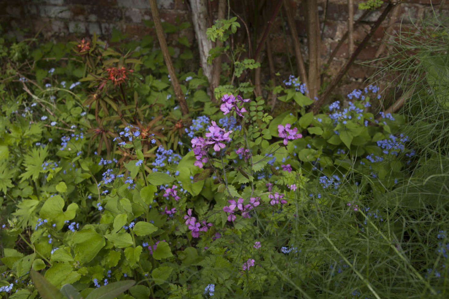 Honesty prevents this combination of fireglow spurge, forget-me-not, and fennel from being too tasteful.