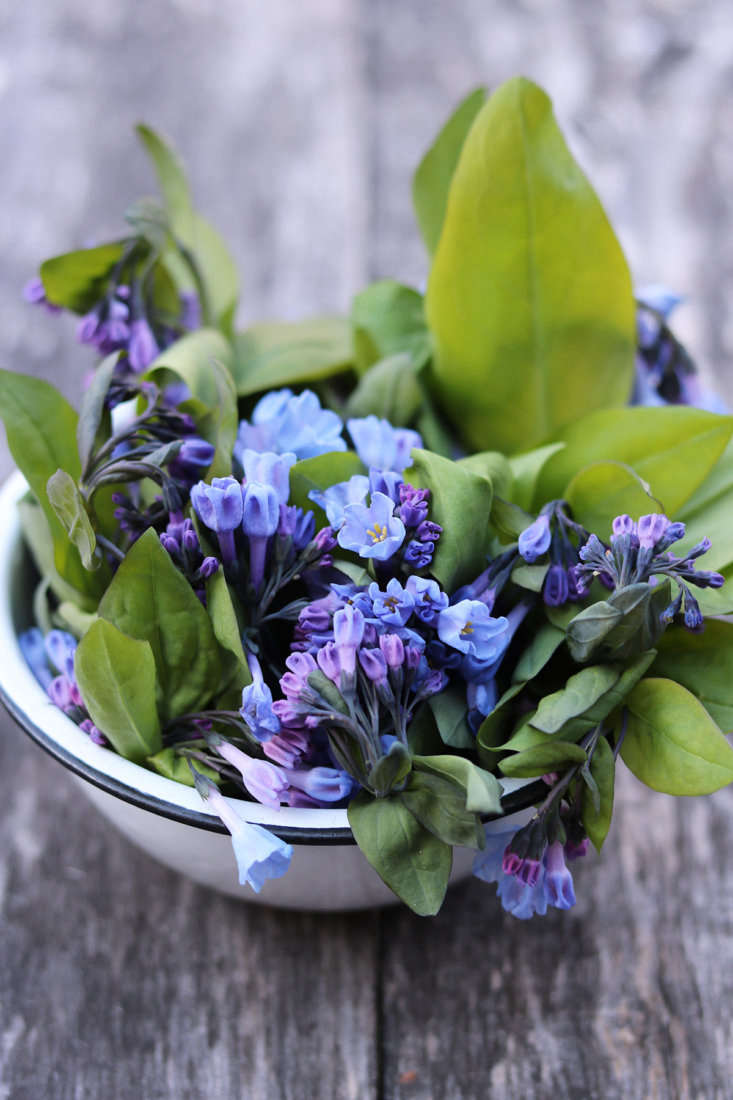 These lovely early spring ephemerals have a seashore flavor—best raw—that makes me think of fresh oysters. Dress those shucked mollusks with the flowers and a floral sauce mignonette, or stir them through cold soba noodles with a slick of soy and sesame oil.