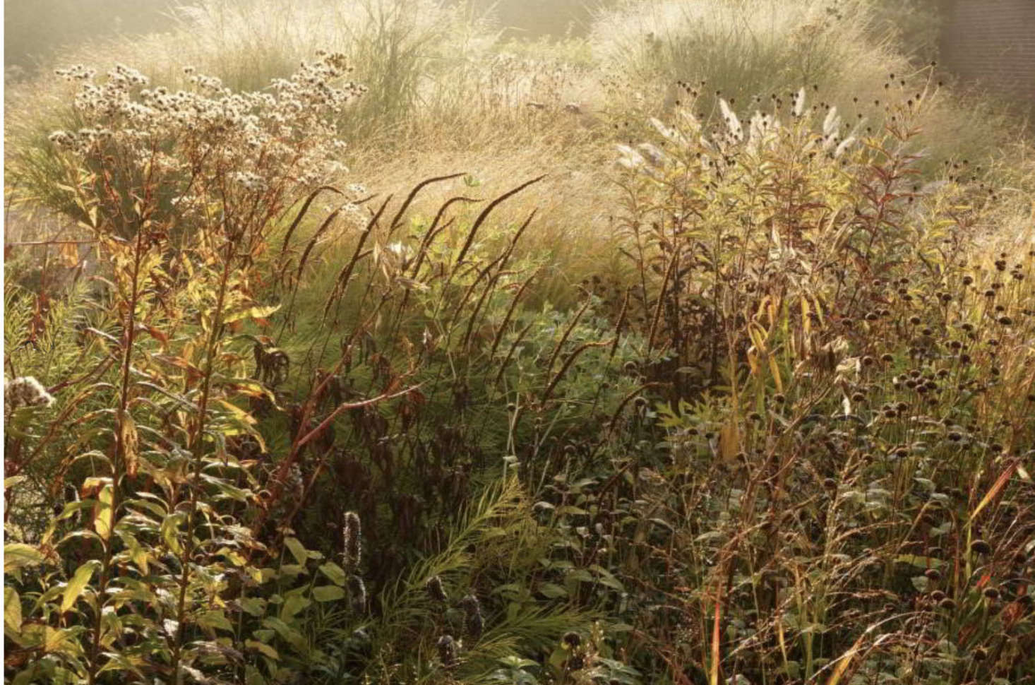 Perhaps the biggest challenges of capturing the magic of a garden on film are the everchanging weather and the ephemeral nature of plants.