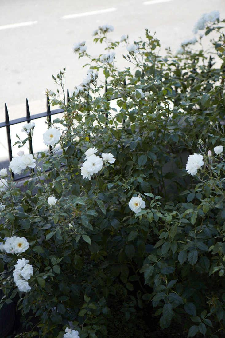 Sheila Jack&#8\2\17;s front garden in West London is a buffer from the street.