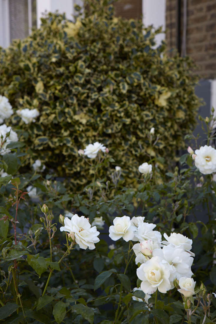 Tasteful white roses are shaken up by a bit of variegation.
