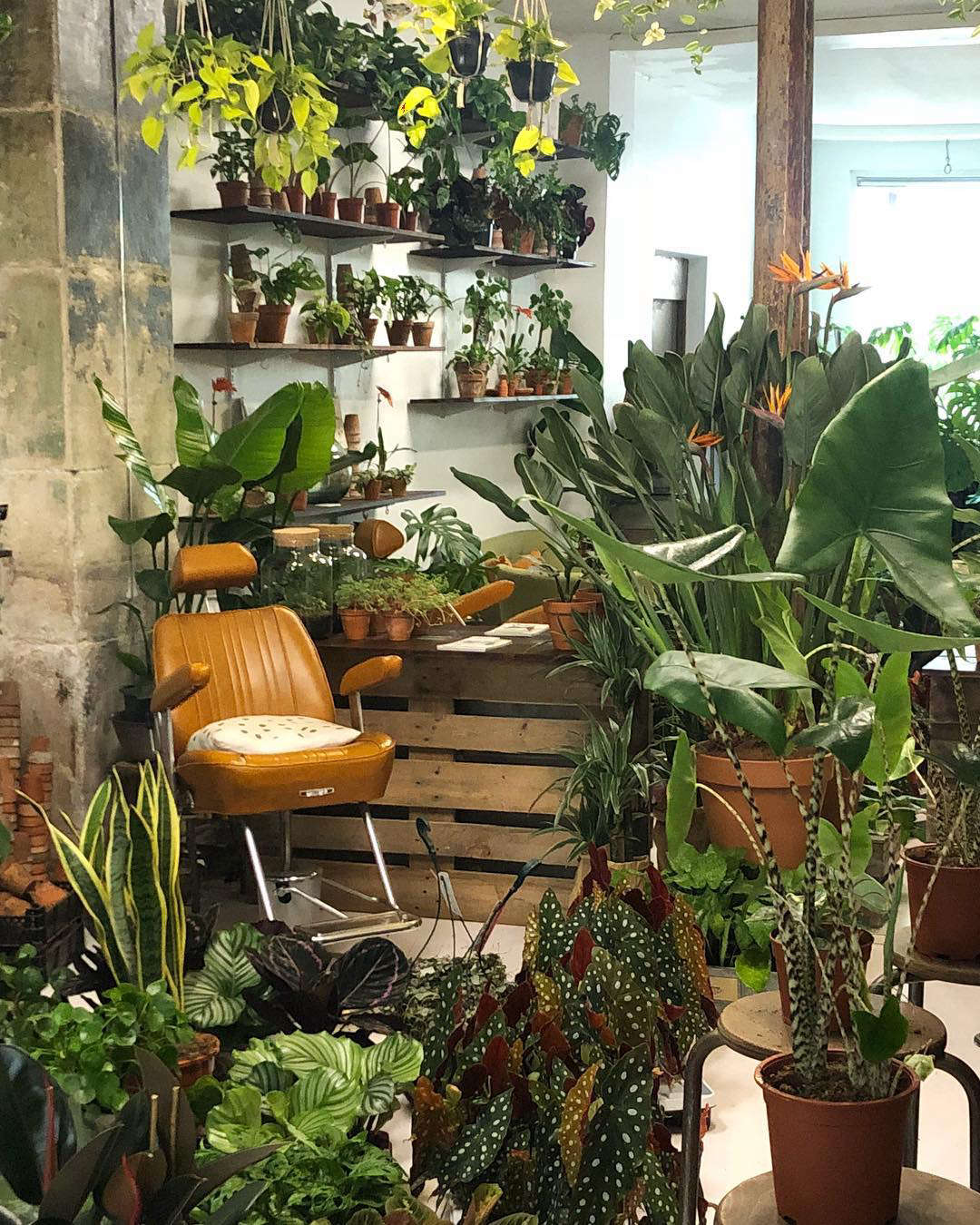 Wooden pallets have been put to use as room dividers and plant shelves. The salon has two chairs, but will increase to six at the new location.