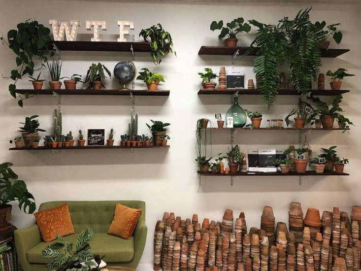 Plant-lined shelves and weathered terracotta planters decorate the entryway at What the Flower.