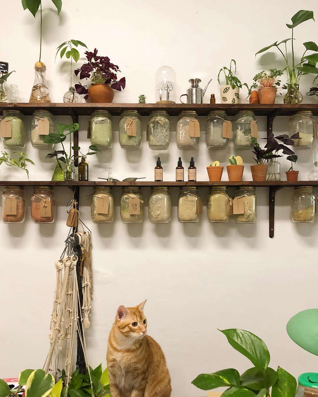 Powdered hair dyes made from plants, flowers, and bark are stored workbench-style in Mason jars secured under the shelves by their lids. In her spare hours, you can find Justine making her own macramé plant hangers.