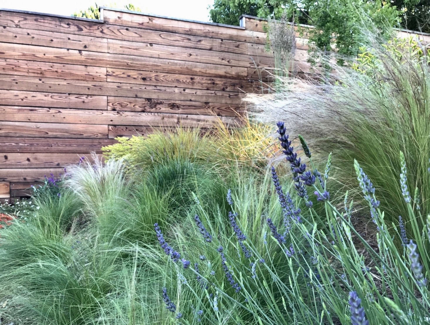Mix-and-match perennial grasses get along well on a slope; shown here are Mexican feather grass (Stipa), New Zealand wind grass, &#8