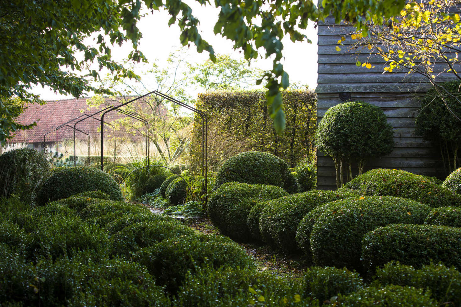 Boxwood topiary is given height by a few taller specimens as well as walls of hornbeam.