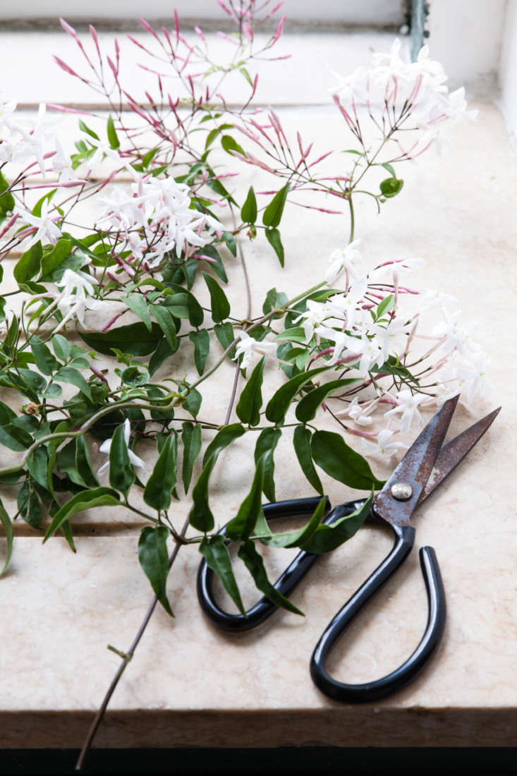 Pick long vines that have unopened pink buds with a few open flowers as well.