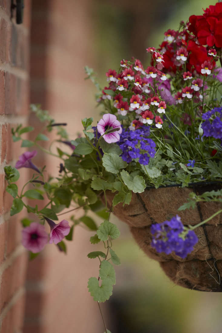 Mix-and-match petunias mingle with other flowering annuals in a hanging basket.