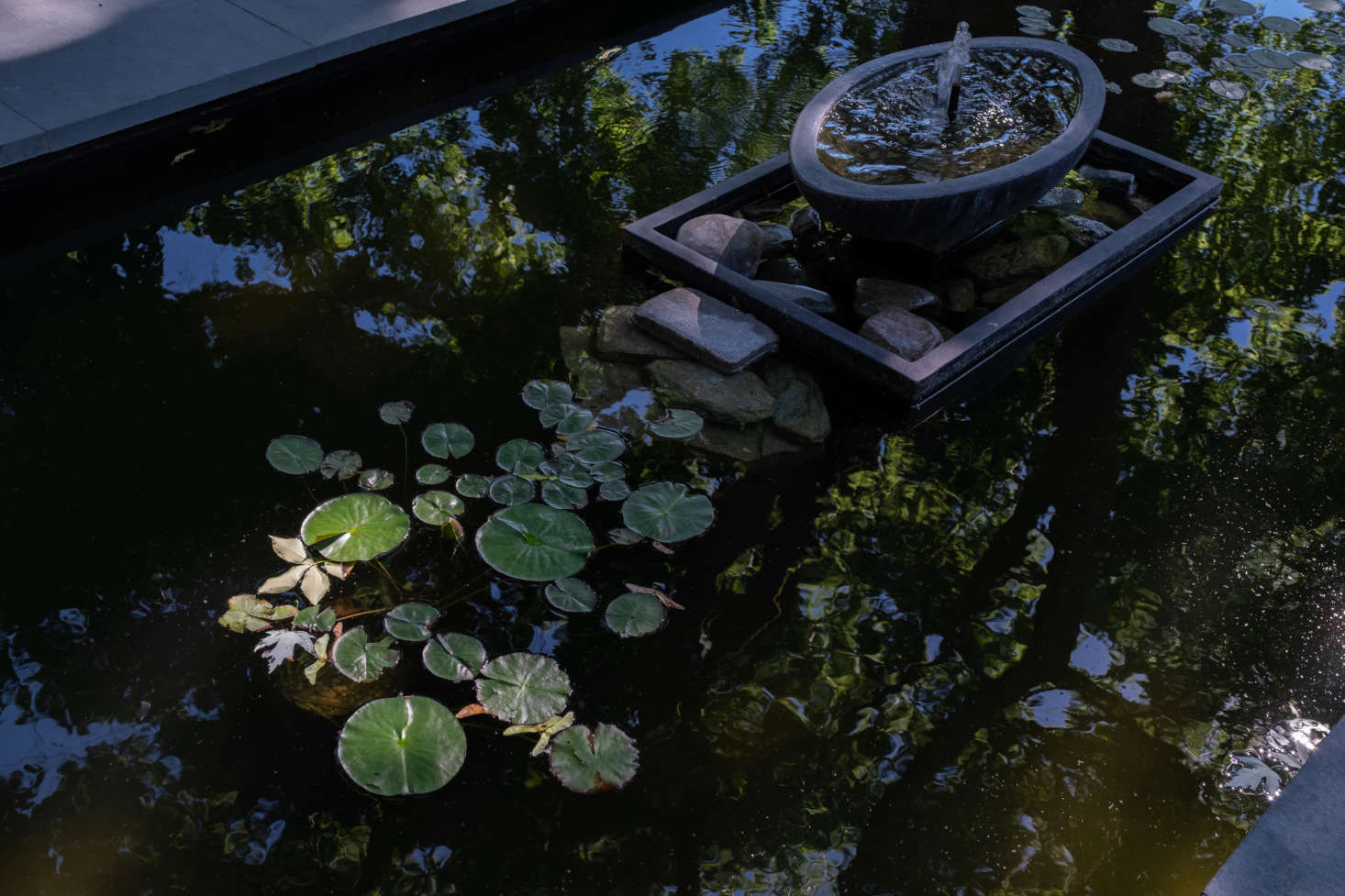 The shallow pool, with lily pads, is home to the couple&#8