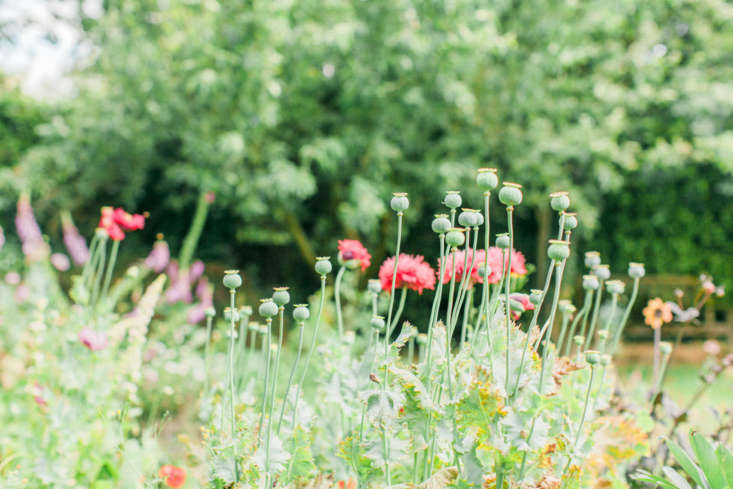 Post-bloom, poppy seed heads add texture to floral arrangements.