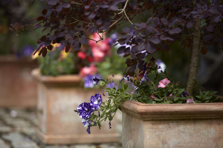 For similarly splotchy purple and white petunias, consider&#8\2\16;Night Sky&#8\2\17;; \$6.75 at Select Seeds.