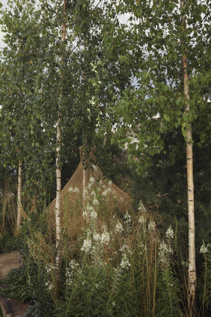 Russian gardens: birch grove