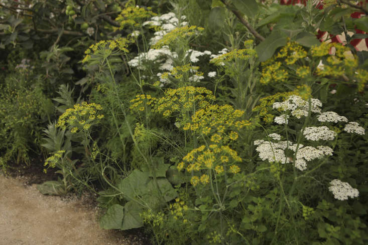 Dill, a natural insect-repelling plant, blooms above cucumbers. Photograph by Jim Powell for Gardenista, from loading=