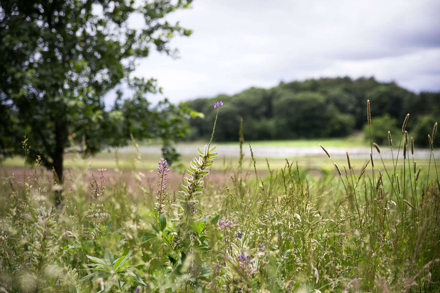 Wild grasses sway in the breeze and frame the view of the farm fields beyond.