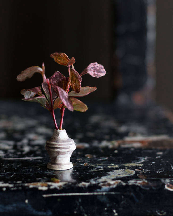 A miniature vase with foraged leaves; vase by Baradax Ceramics.
