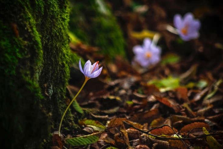 Did fairies sprinkle crocus bulbs at the base of this tree? Photograph by Evan Karageorgos via Flickr.