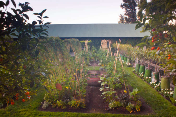 &#8\2\20;Front left bed is eggplants and zinnias. The vegetable bed on the right consists of four tomatoes trained up four 8-foot pieces of bamboo. Production is very good on the tepee system. This system makes it possible to grow more tomatoes in a small space.&#8\2\2\1;