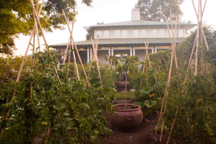 &#8\2\20;Bamboo tomato tepees. Fig tree and strawberries in a pot.&#8\2\2\1;
