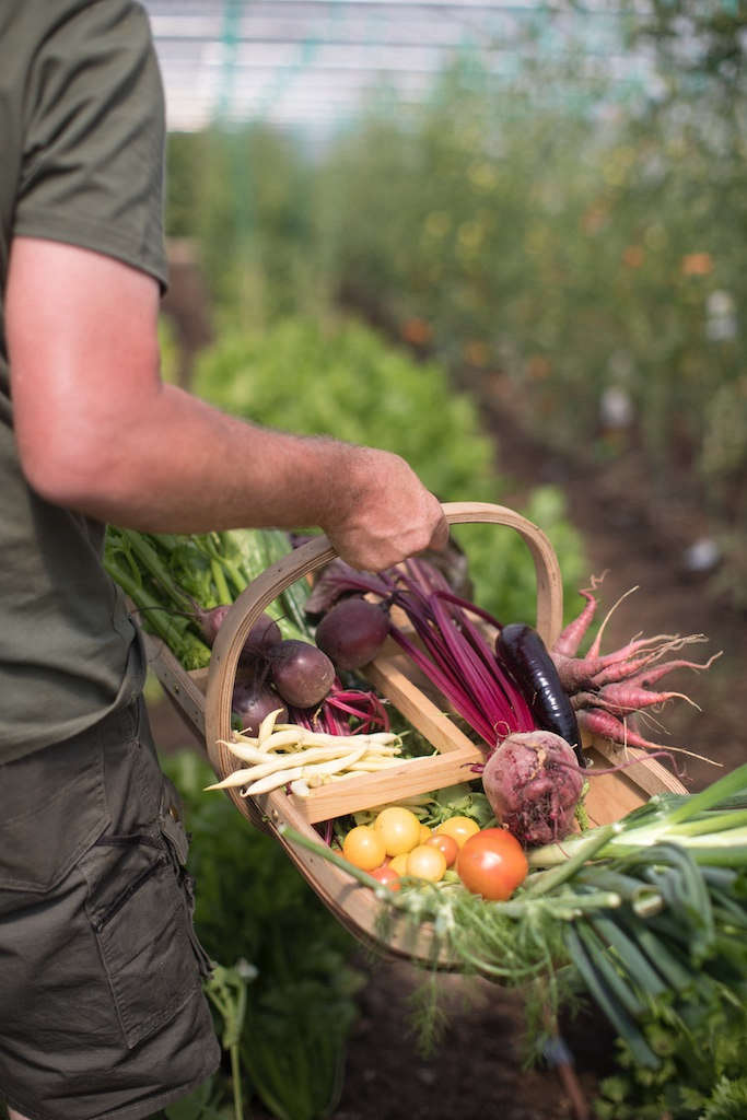 The produce grown here is served exclusively at Heckfield Place and Spring (although until the official opening, surplus stock has found its way into a few lucky local farm shops).