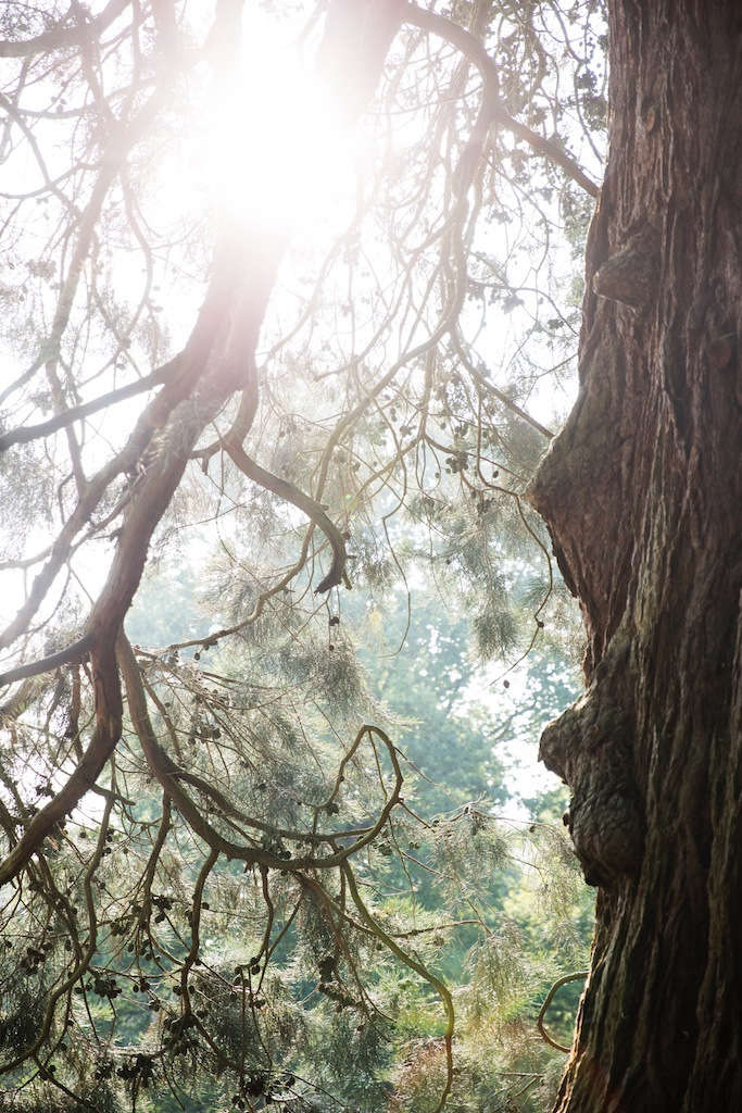 """The arboretum—which includes many rare trees, such as the Lebanese cedar and a Monterey pine —had been left untended for years. """"Many trees had died or were being swallowed up by rhododendron,&#8"""