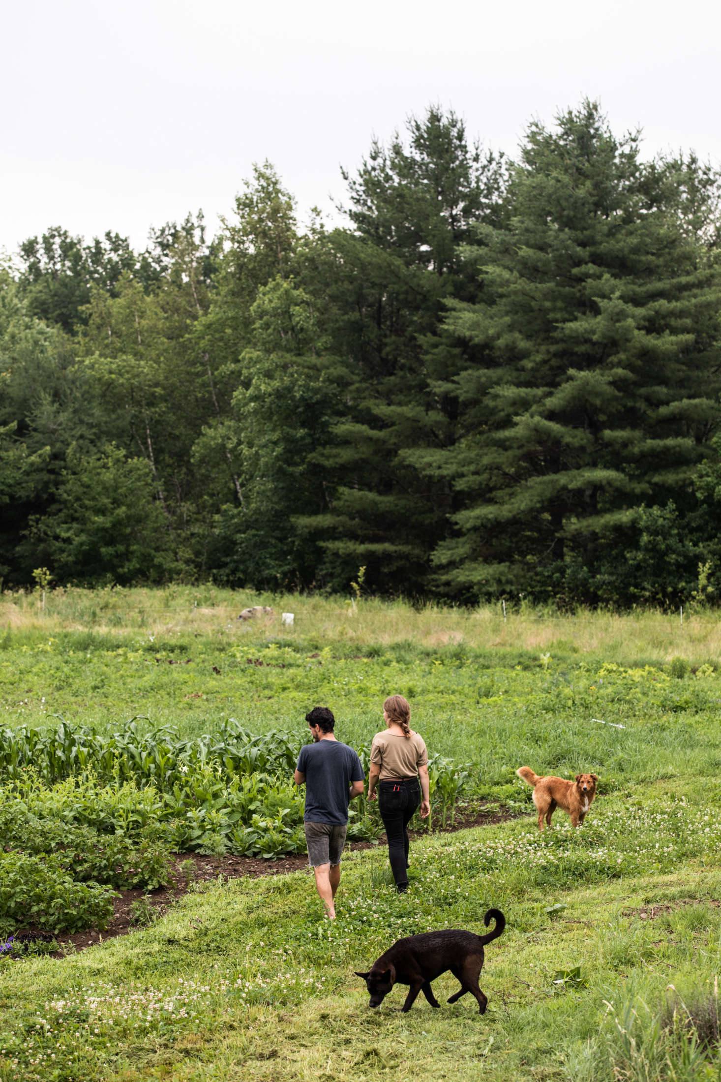 In addition to birds and hogs, the couple tends an acre of vegetables, herbs, and flowers &#8