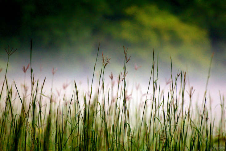 Not to be confused with little bluestem grass: big bluestem grass is a quintessential prairie grass. Photograph by J. Van Cise via Flickr.