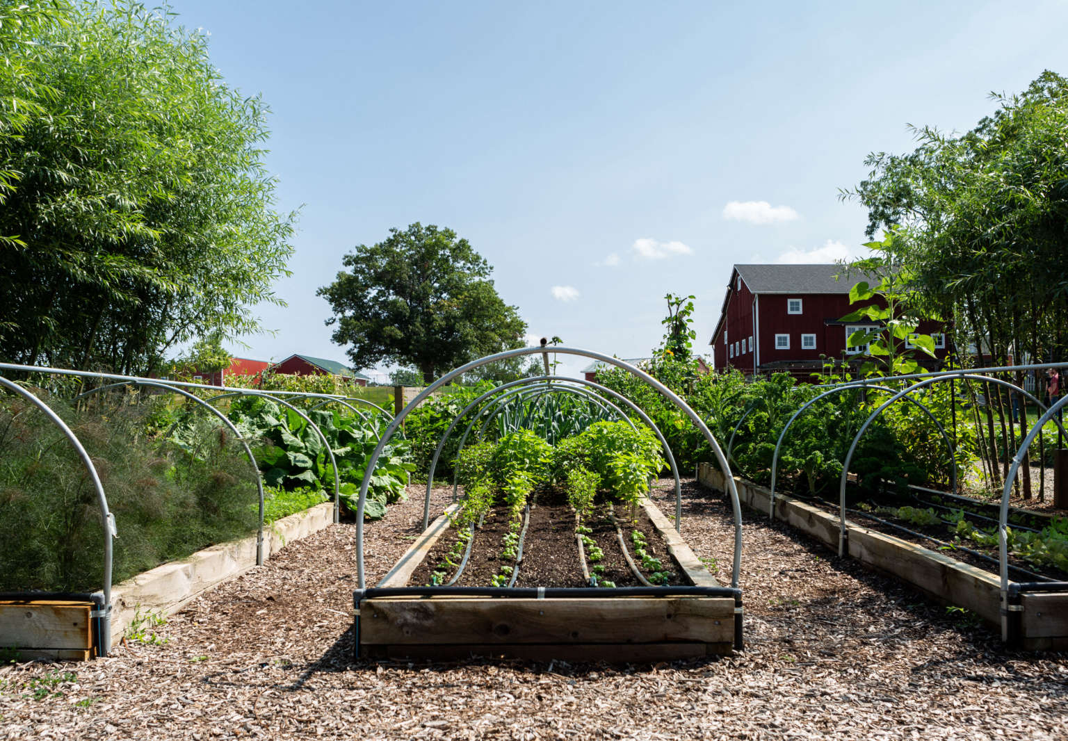 10 Edible Garden Ideas To Steal From Michigan