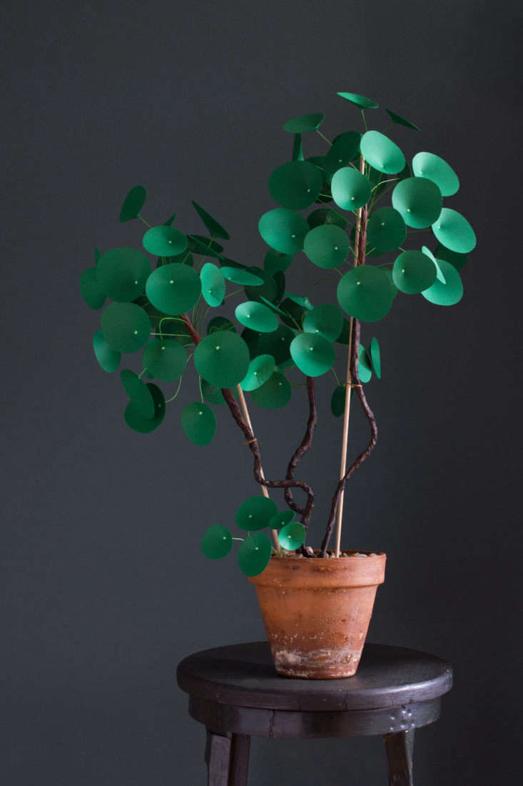 The large potted paper Pilea peperomioides will be \$375 at GRDN.