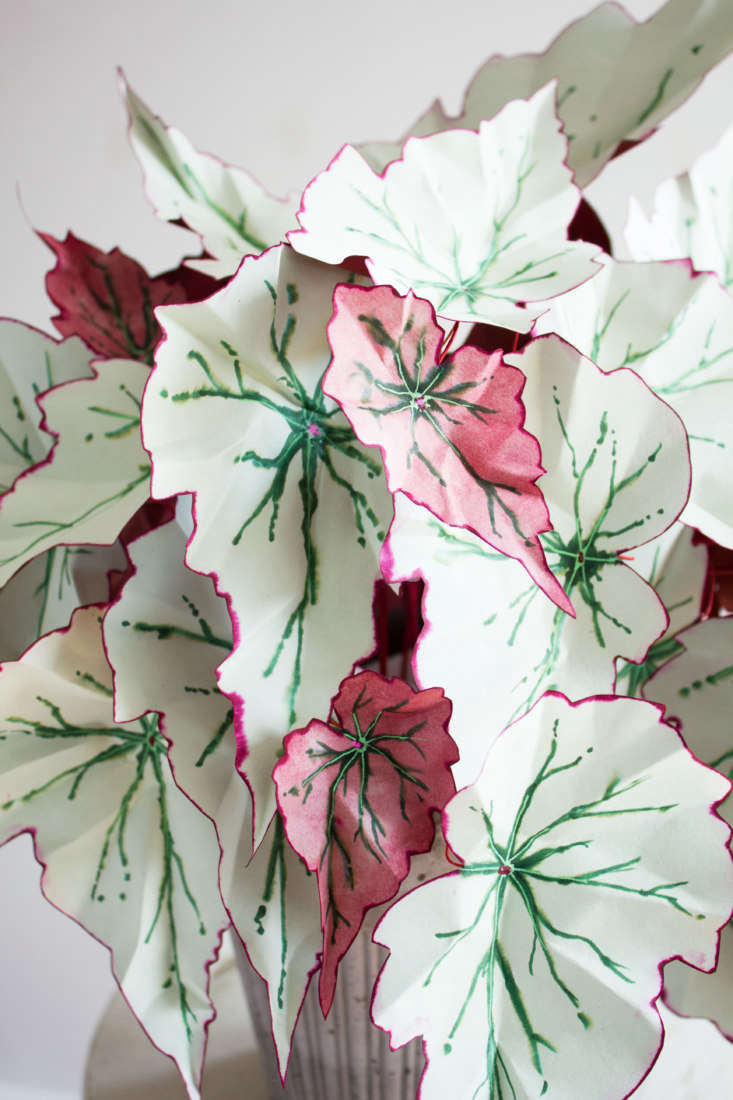 What&#8\2\17;s next for Hogg? &#8\2\20;I currently have a long list of begonias I want to make, and I am inspired by things like caladiums, which you don't typically put indoors.&#8\2\2\1;