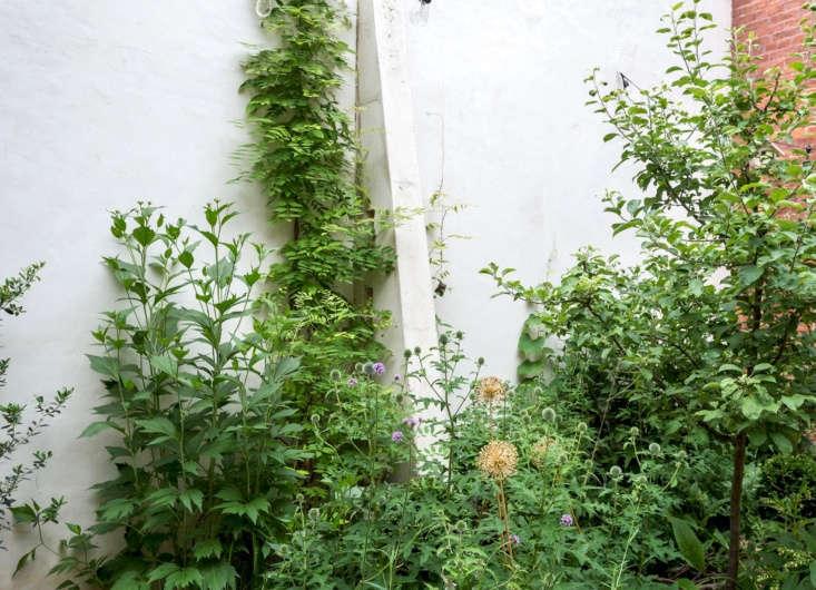 Wisteria, alliums, verbena are planted against a white backdrop.