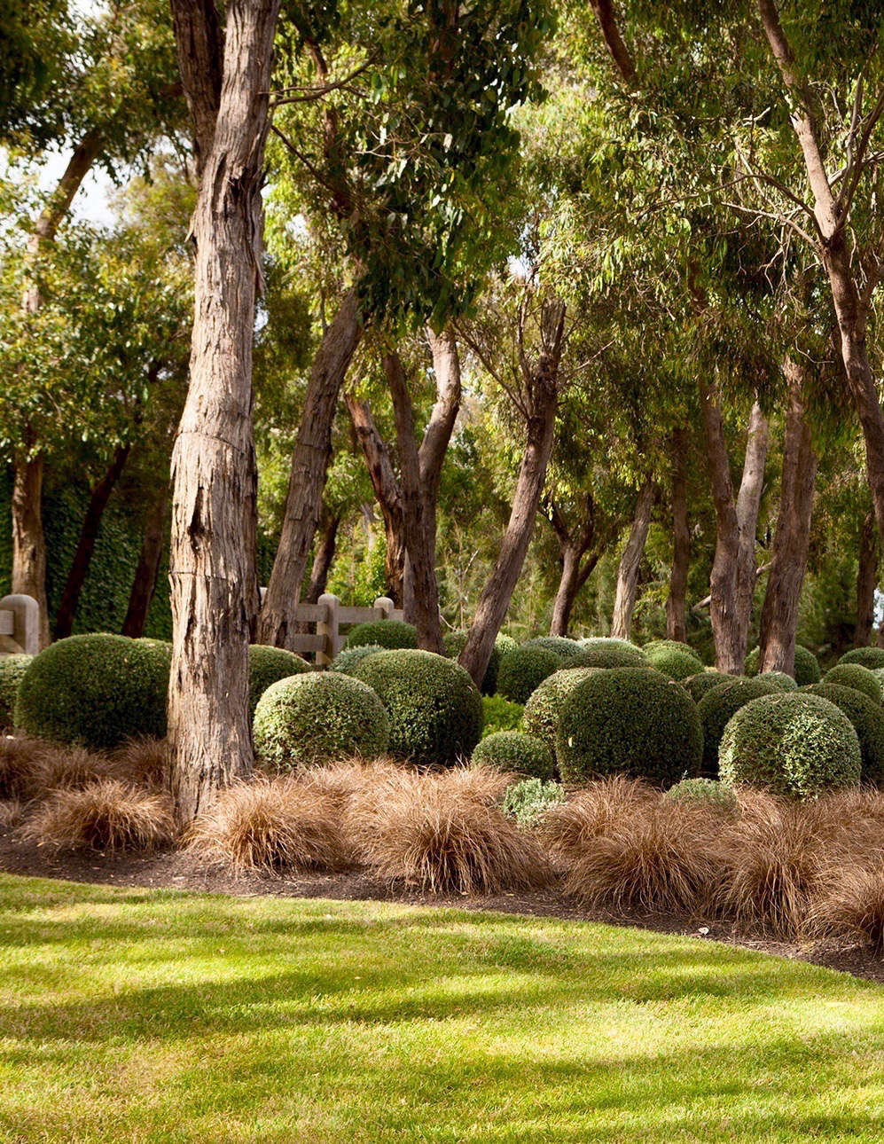 Shrubs including Westringia and silver-leafed germander (Teucrium fruticans) are clipped into round globe shapes.