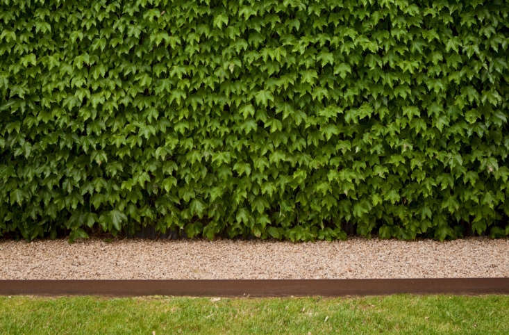 Boston ivy cloaks a wall, bordered by more granite gravel held in check by Corten steel landscape edging.
