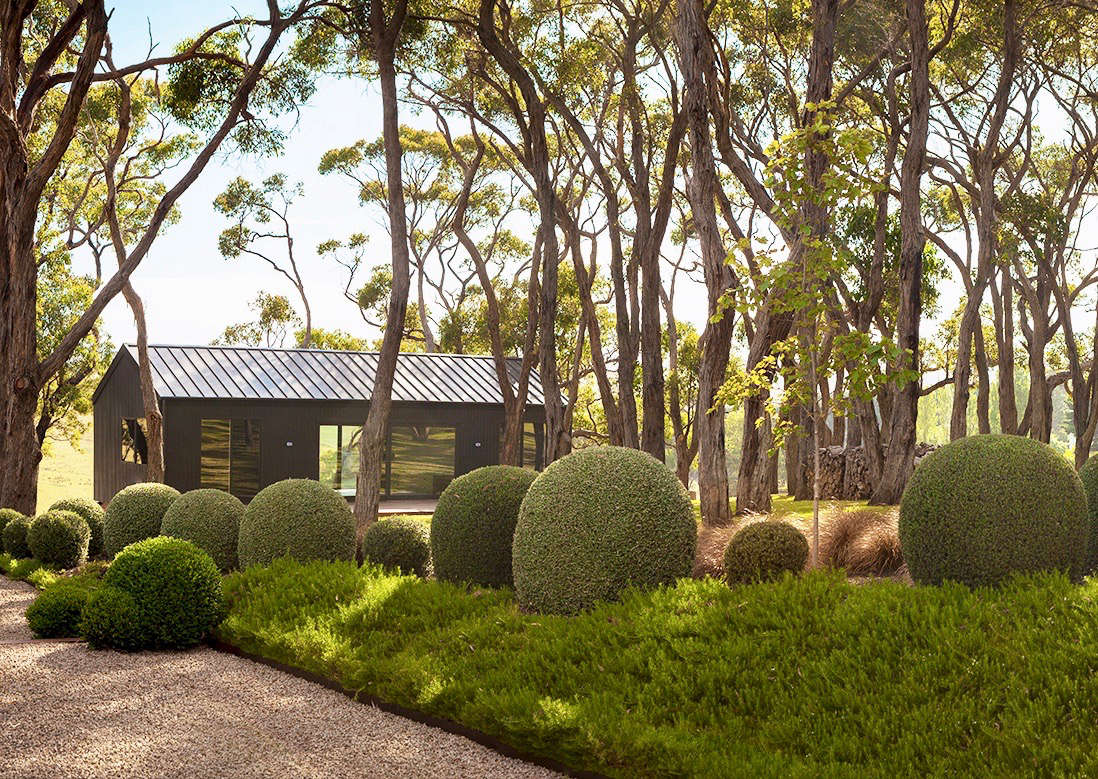 Native to Australia, Eucalyptus radiata trees gracefully drape over a zinc-sided guesthouse and a courtyard paved in granite gravel. Clipped boxwood balls breach the boundary between planting beds and gravel.