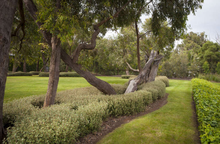 A turf developed in drought-prone Australia, Kikuyu 'Village Green' is a low-water alternative to a traditional lawn.